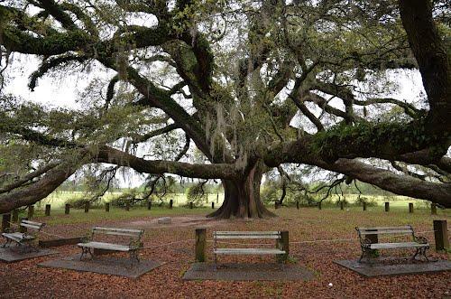 geneva tree